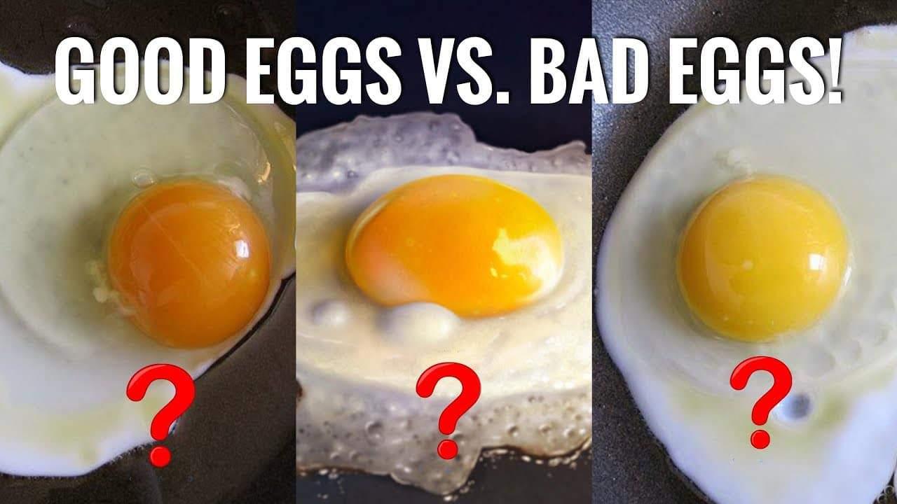 food eggs vs bad eggs